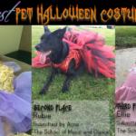 starquest, starquestdance, pet, halloween, costume