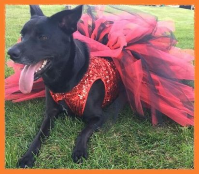 Check out these very furry scary contestants from past years! & StarQuest Dance Halloween Pet Costume Contest! -